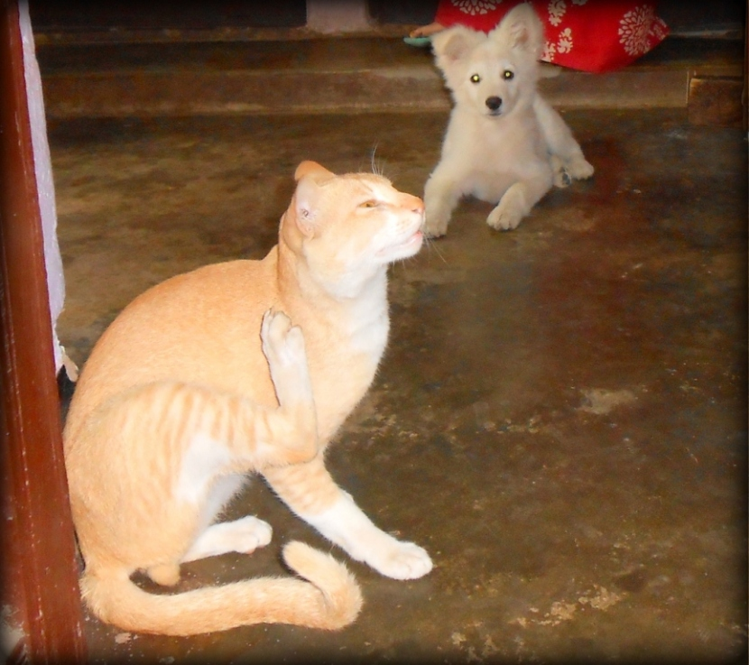 Brothers... My Cat & Dog!!